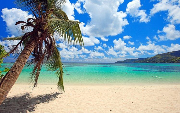 море, пляж, пальма, отдых, тропики, sea, beach, palma, stay, tropics