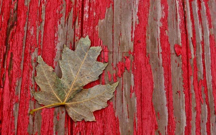 дерево, краска, лист, доски, tree, paint, sheet, board