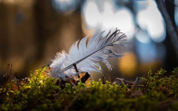 природа, макро, мох, перо, боке, перышко, nature, macro, moss, pen, bokeh, a feather