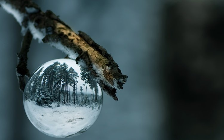 ветка, природа, новый год, шар, праздник, branch, nature, new year, ball, holiday