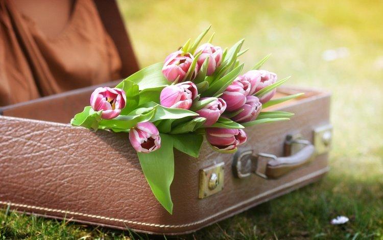 цветы, трава, природа, тюльпаны, чемодан, flowers, grass, nature, tulips, suitcase