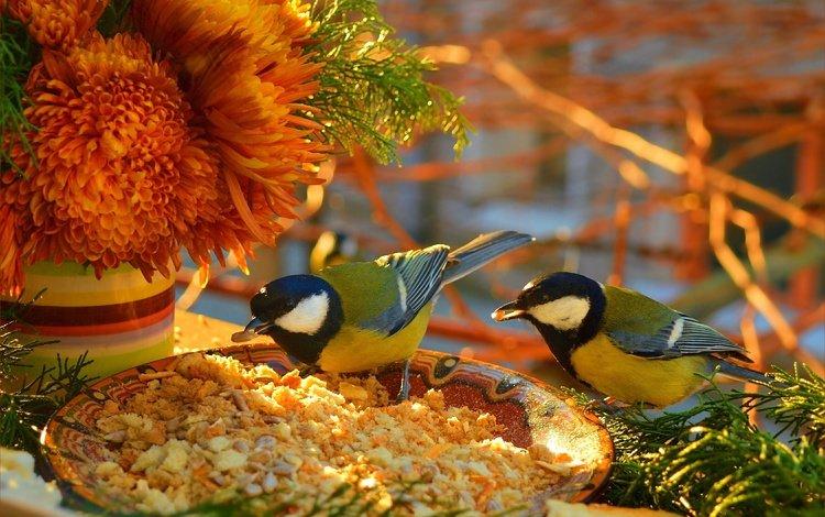 цветы, птицы, птички, цветы, крошки, синицы, пернатые, flowers, birds, crumbs, tits
