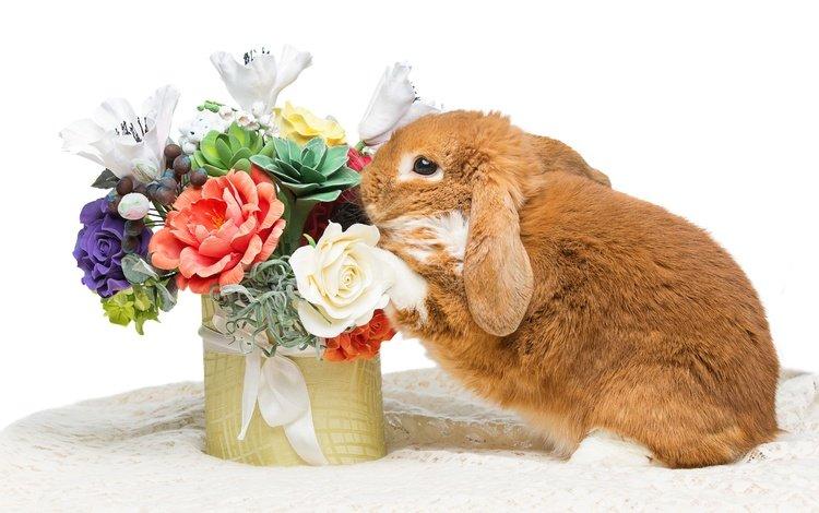 цветы, зайка, кролик, пасха, цветы, глазунья, декорация, весенние, зеленые пасхальные, довольная, flowers, bunny, rabbit, easter, eggs, decoration, spring, happy