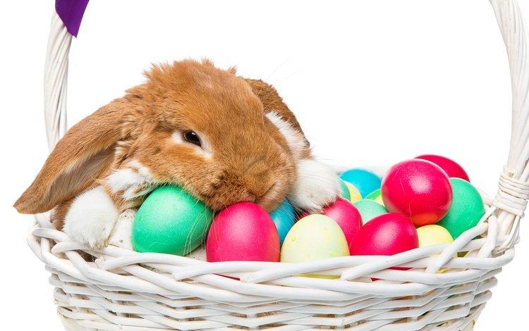 корзина, яйца крашеные, кролик, пасха, глазунья, декорация, весенние, зеленые пасхальные, довольная, зайка, bunny, basket, the painted eggs, rabbit, easter, eggs, decoration, spring, happy