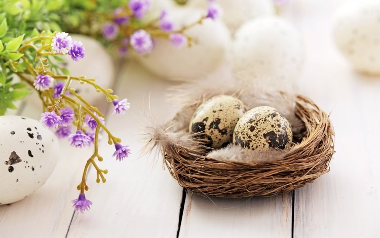 цветы, довольная, перья, яйца крашеные, пасха, гнездо, цветы, глазунья, декорация, весенние, зеленые пасхальные, flowers, happy, feathers, the painted eggs, easter, socket, eggs, decoration, spring
