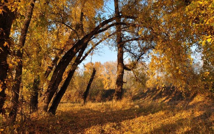 деревья, листва, осень, расцветка, деревь, опадают, осен, листья, trees, foliage, autumn, colors, fall, leaves