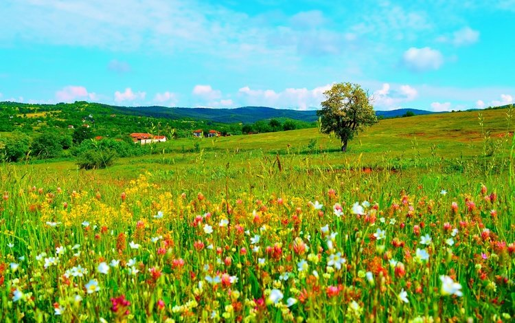 небо, цветы, облака, деревья, холмы, природа, поле, весна, the sky, flowers, clouds, trees, hills, nature, field, spring