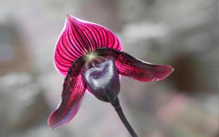 макро, цветок, лепестки, орхидея, macro, flower, petals, orchid