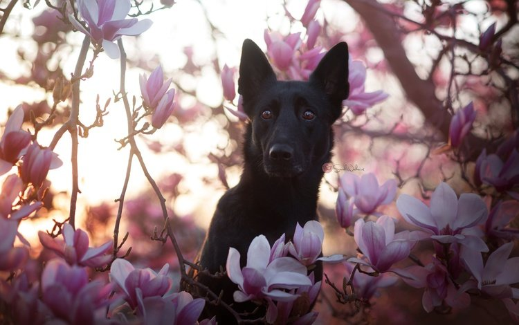 цветы, природа, собака, друг, flowers, nature, dog, each
