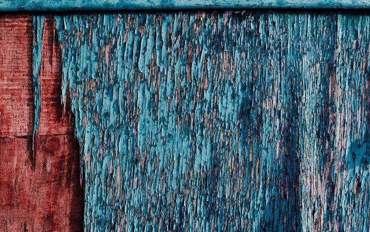 дерево, цвет, стена, краска, деревянная поверхность, tree, color, wall, paint, wooden surface