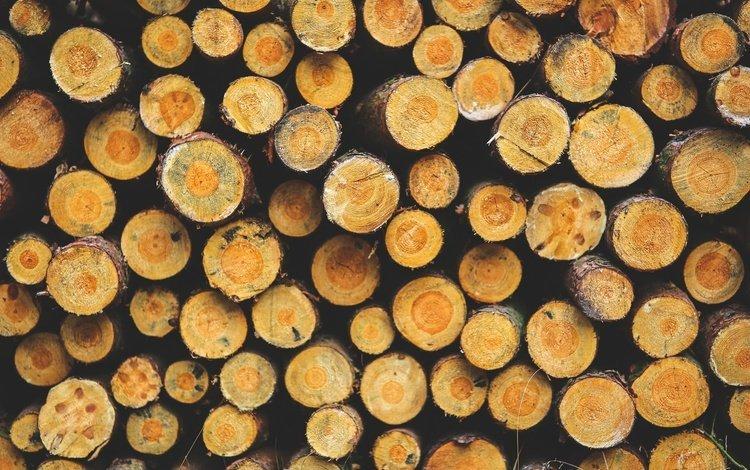 деревья, дерево, текстура, кора, бревна, trees, tree, texture, bark, logs