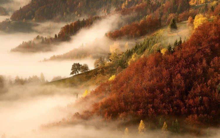 деревья, горы, природа, лес, утро, туман, осень, trees, mountains, nature, forest, morning, fog, autumn