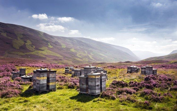 небо, улей, цветы, аушаллатер, облака, холмы, природа, пейзаж, великобритания, шотландия, the sky, beehive, flowers, achallader, clouds, hills, nature, landscape, uk, scotland
