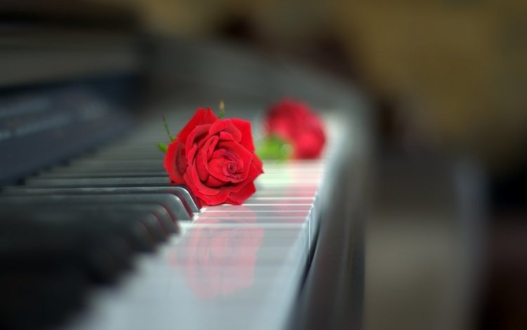 Flowers Style Rose Piano Keys Red