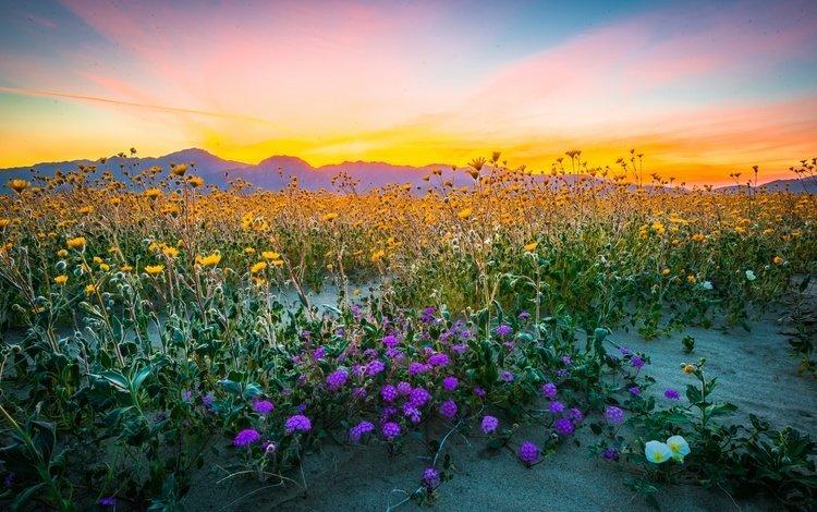 Полевые цветы в горах