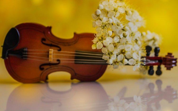 flowers, reflection, violin, petals, spring