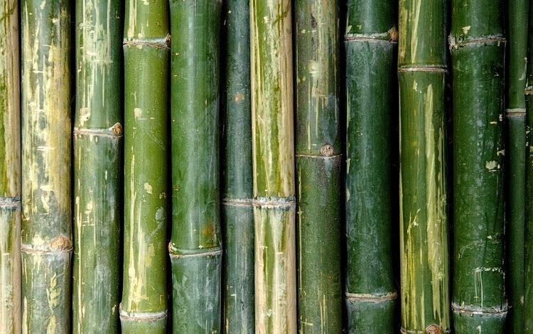 texture, green, bamboo, stems