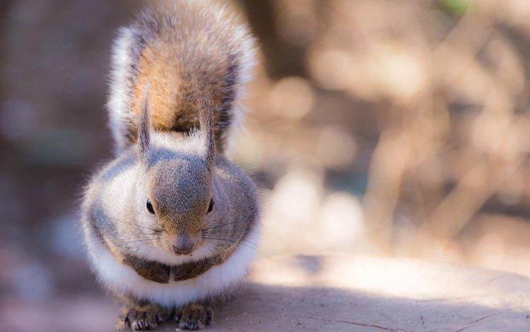 животное, белка, хвост, пень, лапки, белочка, грызун, animal, protein, tail, stump, legs, squirrel, rodent
