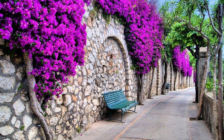 цветы, дорожка, стена, улица, италия, романтика, скамейка, flowers, track, wall, street, italy, romance, bench
