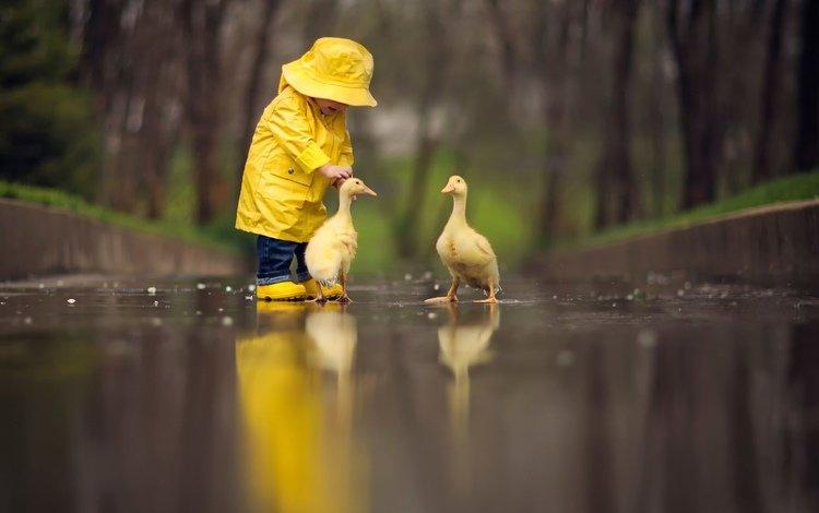 девочка, маленькая, гуси, girl, little, geese