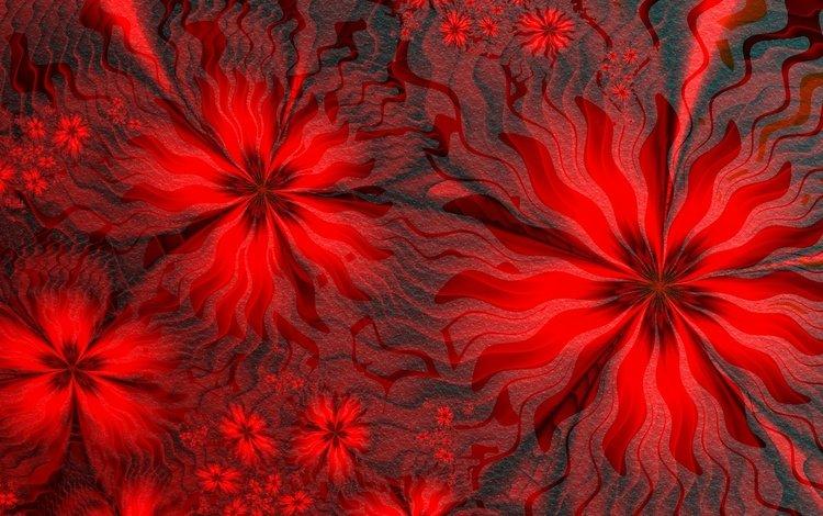 цветы, линии, фон, узор, лепестки, цвет, красный, flowers, line, background, pattern, petals, color, red