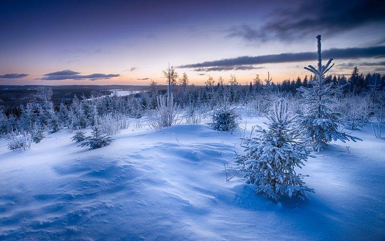 снег, закат, зима, елки, сугробы, snow, sunset, winter, tree, the snow