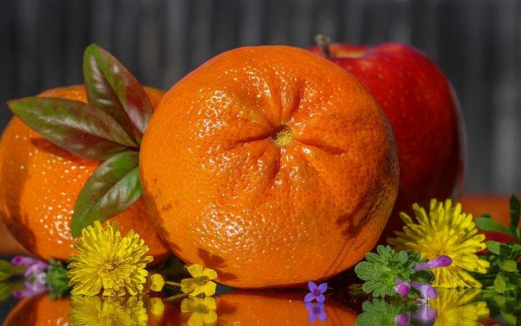 цветы, фрукты, апельсин, яблоко, цитрус, flowers, fruit, orange, apple, citrus