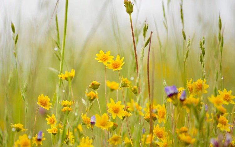 Желтые луговые цветы