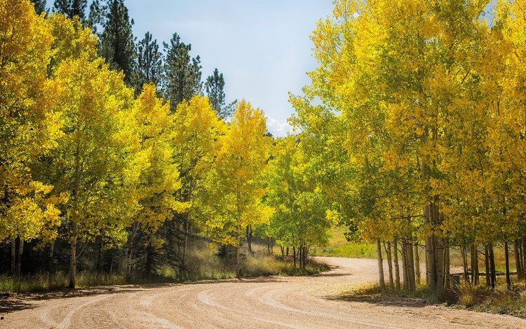 дорога, деревья, лес, осень, сша, колорадо, осина, аспен, road, trees, forest, autumn, usa, colorado, aspen