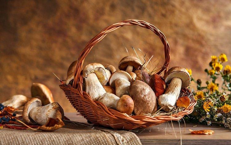 цветы, грибы, белый, корзина, шляпки, flowers, mushrooms, white, basket, hats