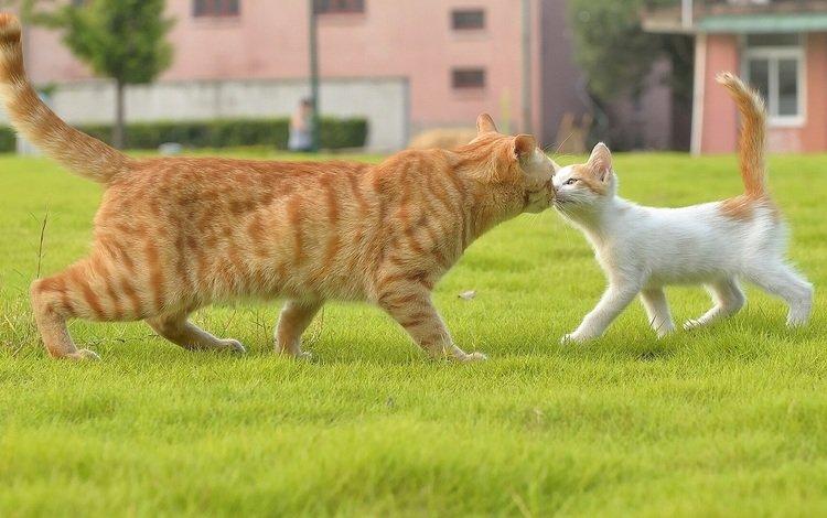 трава, кот, усы, лапы, кошка, котенок, хвост, grass, cat, mustache, paws, kitty, tail