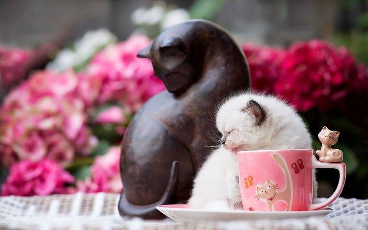 цветы, кот, кошка, котенок, блюдце, животное, чашка, детеныш, фигурка, figure, flowers, cat, kitty, saucer, animal, cup, cub