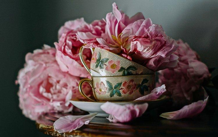 цветы, лепестки, чашки, столик, натюрморт, пионы, flowers, petals, cup, table, still life, peonies