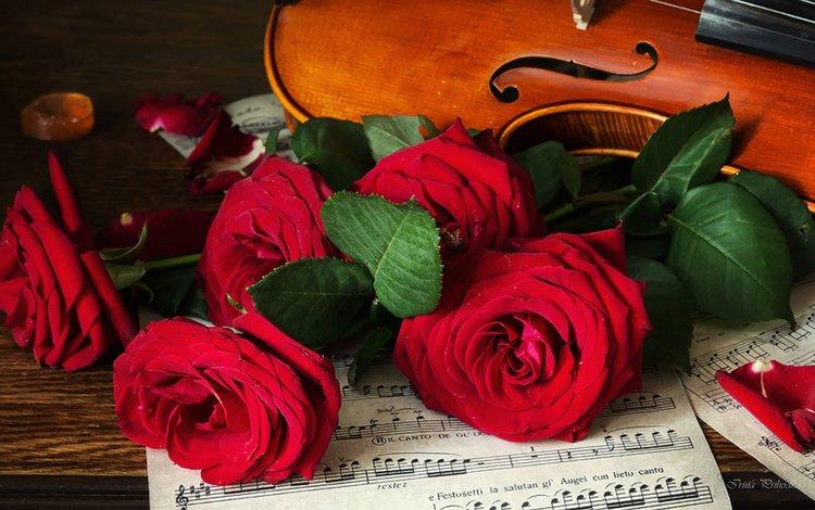 цветы, розы, ноты, скрипка, лист, музыкальный инструмент, flowers, roses, notes, violin, sheet, musical instrument