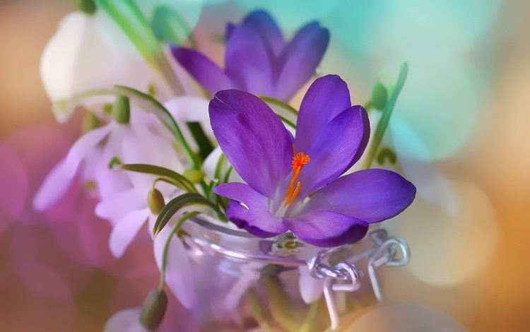 цветы, весна, банка, подснежники, крокусы, боке, flowers, spring, bank, snowdrops, crocuses, bokeh
