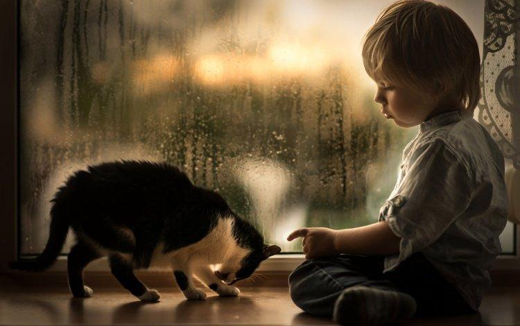 капли, малыш, котенок, подоконник, дети, iwona podlasinska, дождь, ребенок, окно, мальчик, животное, drops, baby, kitty, sill, children, rain, child, window, boy, animal