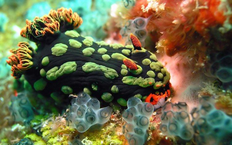 краски, океан, растение, моллюск, кораллы, подводный мир, голожаберный моллюск, paint, the ocean, plant, clam, corals, underwater world, nudibranchs