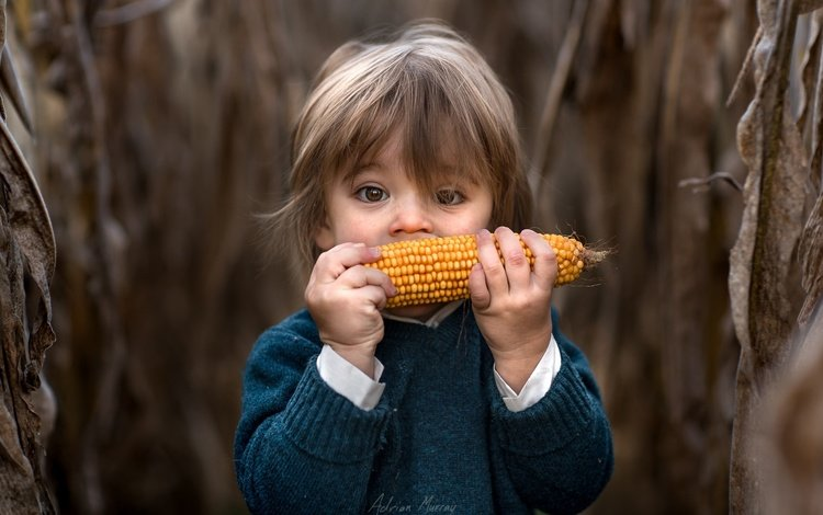 дети, волосы, кукуруза, лицо, ребенок, мальчик, малыш, adrian c. murray, children, hair, corn, face, child, boy, baby
