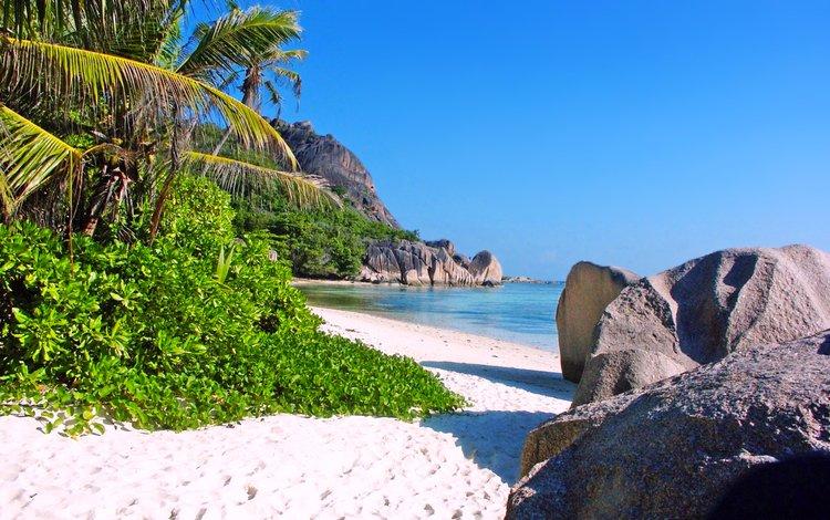 море, пляж, пальмы, отдых, остров, тропики, сейшелы, sea, beach, palm trees, stay, island, tropics, seychelles