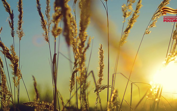небо, трава, солнце, природа, растения, фон, поле, колоски, the sky, grass, the sun, nature, plants, background, field, spikelets