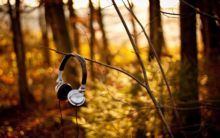 nature, forest, branches, music, autumn, headphones