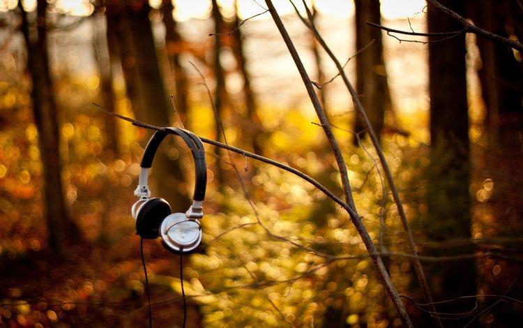 природа, лес, ветки, музыка, осень, наушники, nature, forest, branches, music, autumn, headphones