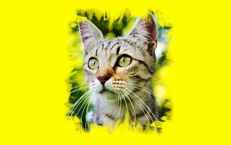глаза, арт, кот, усы, кошка, взгляд, eyes, art, cat, mustache, look