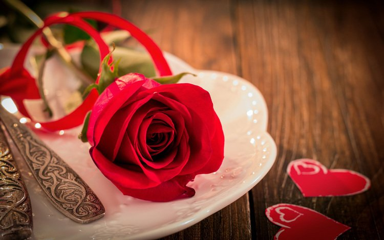 flower, rose, hearts, valentine's day, serving