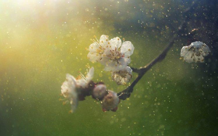 ветка, природа, цветение, фон, размытость, весна, branch, nature, flowering, background, blur, spring