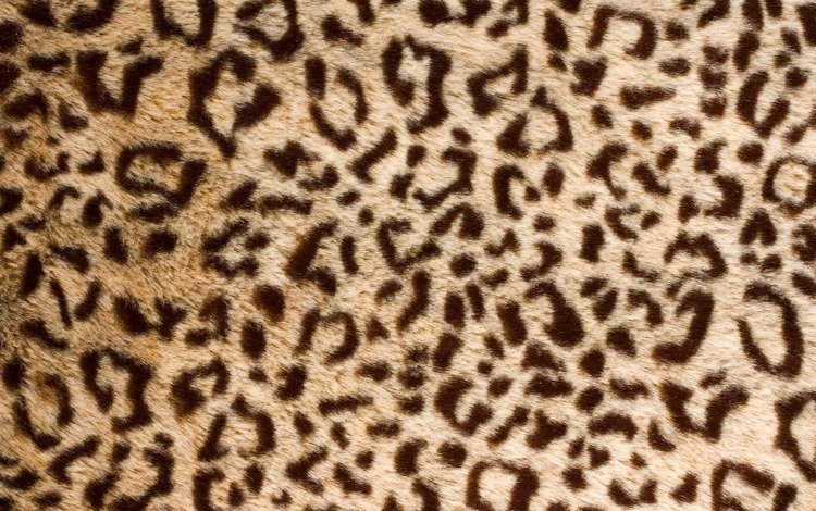 текстура, леопард, шкура, мех, texture, leopard, skin, fur