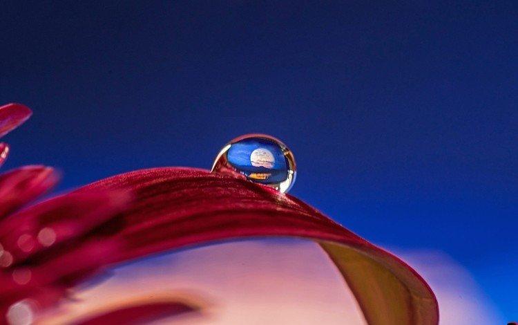 вода, макро, цветок, капля, лепестки, гербера, abdularhman adi, water, macro, flower, drop, petals, gerbera