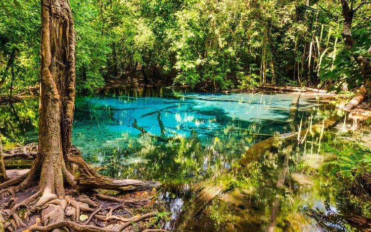 Красивое озеро в густом лесу