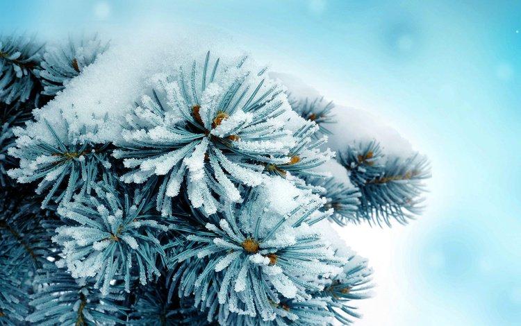 ветка, снег, природа, хвоя, зима, фон, ель, иголки, branch, snow, nature, needles, winter, background, spruce