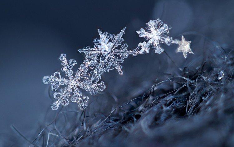 макро, снежинки, фон, снежинка, кристаллы, macro, snowflakes, background, snowflake, crystals